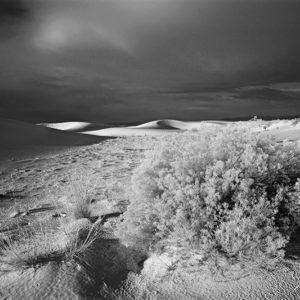 White Sands Bush