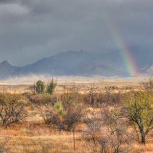 Santa Rita Desert-Bow-
