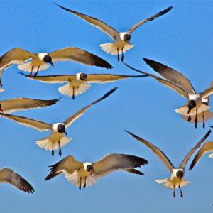 Terns