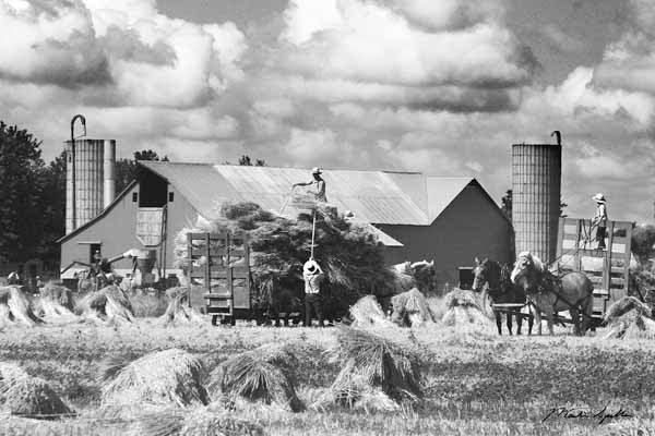 Amish Crew