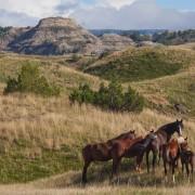 Badlands Ponies