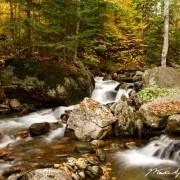 Vermont Gold Rush