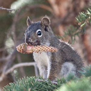 Happy Squirrel Morning Treat