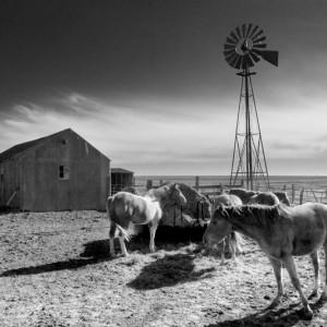 Mustang Mill