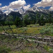 Teton Deadwood