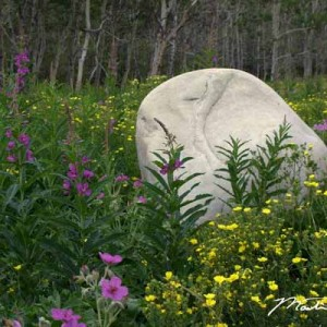 Wildflowers & Stone