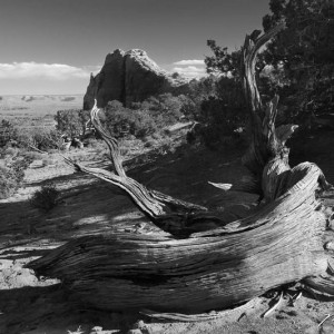 Canyonlands Deadwood