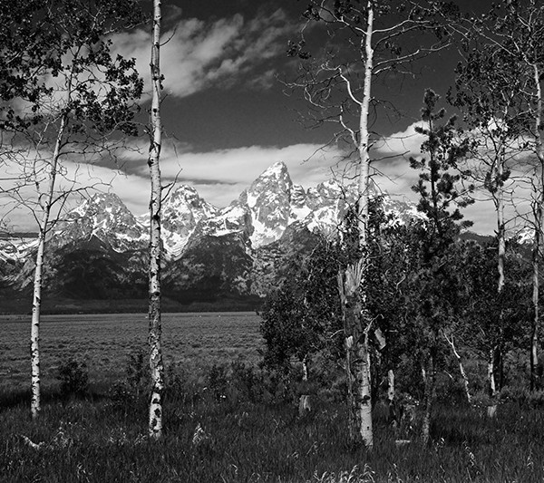 Teton Aspen Window