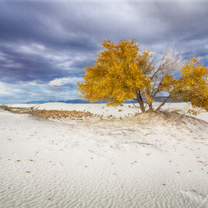 White Sands Gold-1
