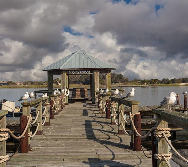 Lake Sumter Gulls