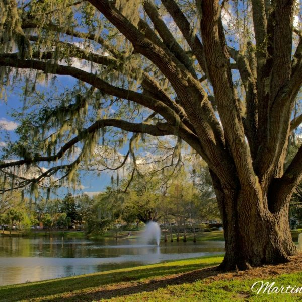 Spanish Springs Lake And Oak