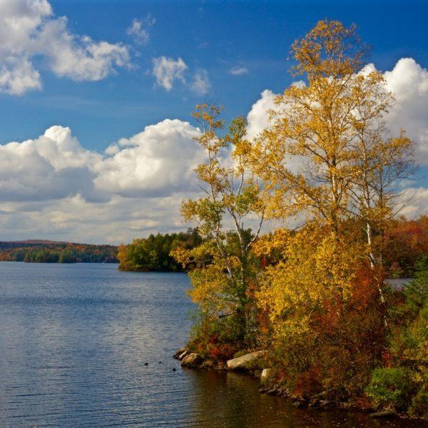 Golden Adirondack Tupper Lake