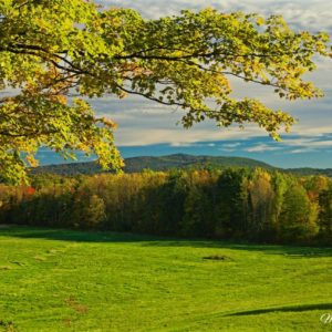 Vermont Autumn Branch