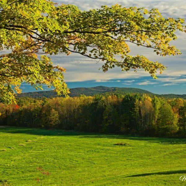 Vermont Autumn Branch
