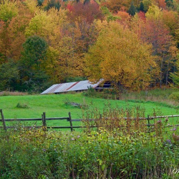 Vermont Autumn Garden