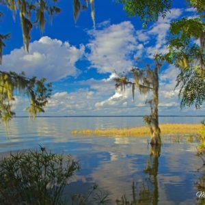 Lake Eustis Cypress