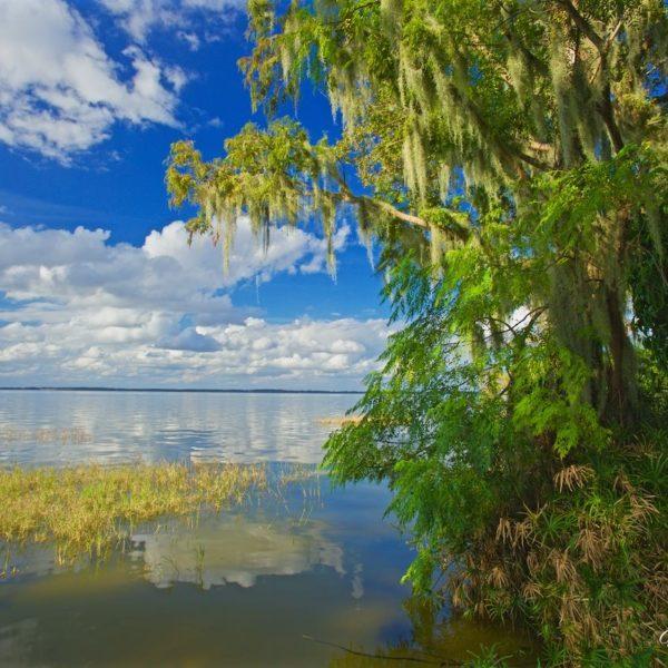 Lake Eustis Spanish Moss Overhang