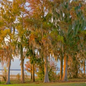 Lake Eustis Cypress Grove