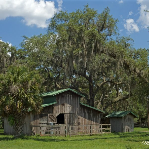 Florida Barn Blue Sky