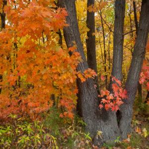 Missouri Ozarks Autumn Colour