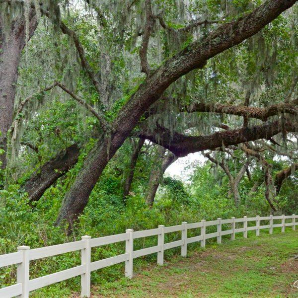 Oak & Moss Overhang