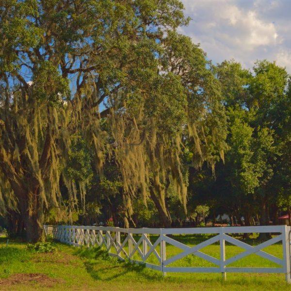 Florida Moss & Fence