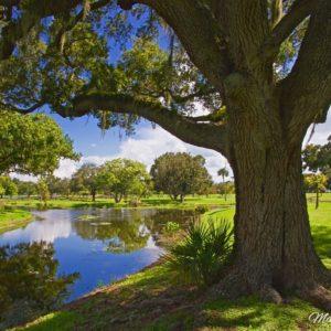 Oak Reflections Vista