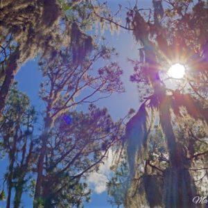 Pine Moss Sunburst