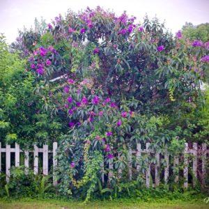 Princess Flower Picket Fence