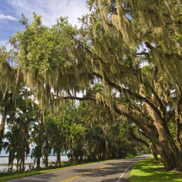 Eustis Lake Drive-1