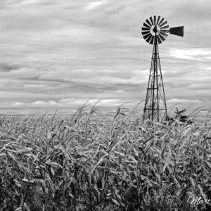October Corn Windmill