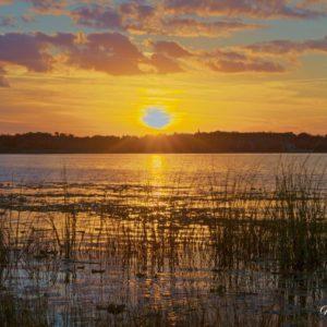 Silver Lake Saw Grass Sunset