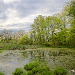 Country Pond Reflections