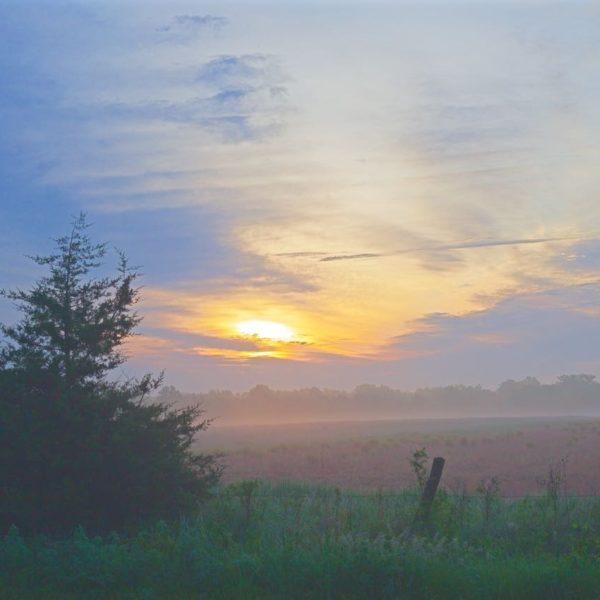 Misty Meadow Sunrise