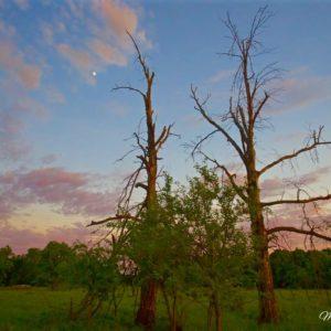 Deadwood Twin Sunset