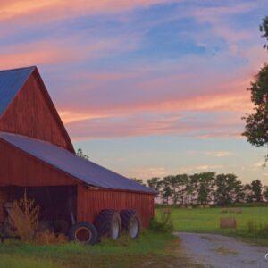 Barn Morning Gate Colour