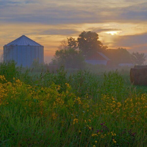 Bin And Barn Misty Sunrise