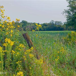 Bean Field Golden Post