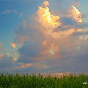 Corn Tassle Cloud Gloria