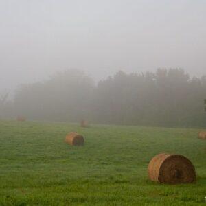 Emerald Foggy Morning Meadow