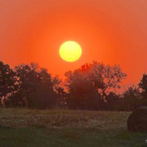 Sunrise Over Stalks
