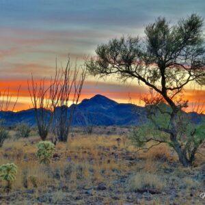 Mesquite Cholla Sierrita Sunset