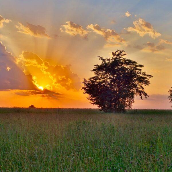 Clover Meadow Sunset